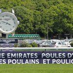 French Guineas Profile: Breizh Eagle